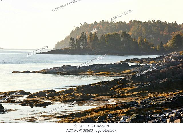 Rocky coatline highlighted in the morning light along Bar Harbor's Shore Path, Maine, U.S.A