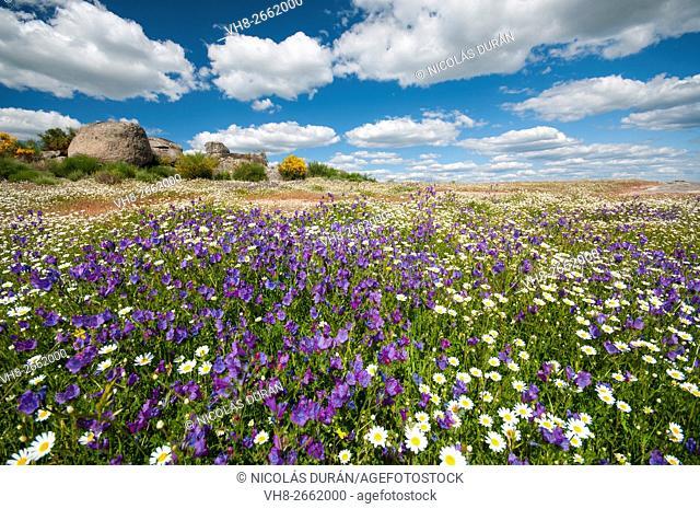 Flower field in Extremadura. Alburquerque, Badajoz, Spain