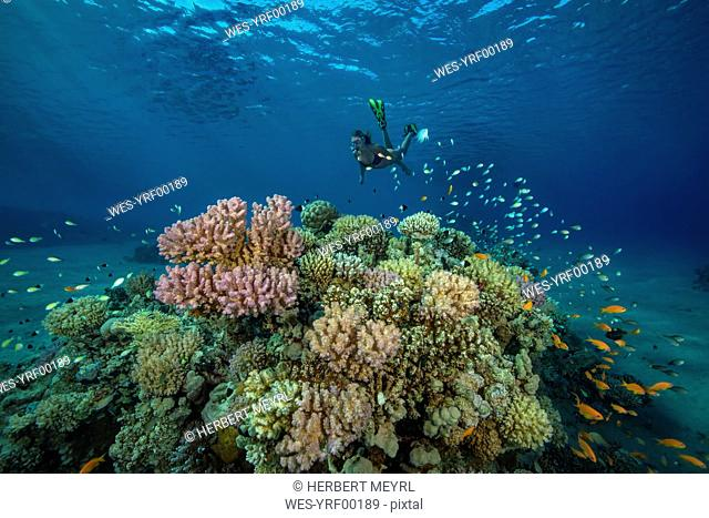 Egypt, Red Sea, Hurghada, teenage girl snorkeling at coral reef