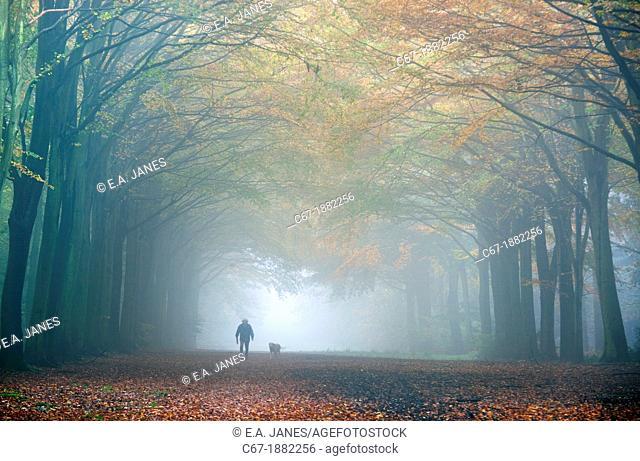 Dog Walker in Autumn fog October Norfolk UK