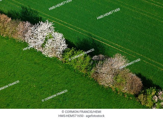 France, Calvados, Swiss Normandy, La Rue Gournay, flowering hedge aerial view