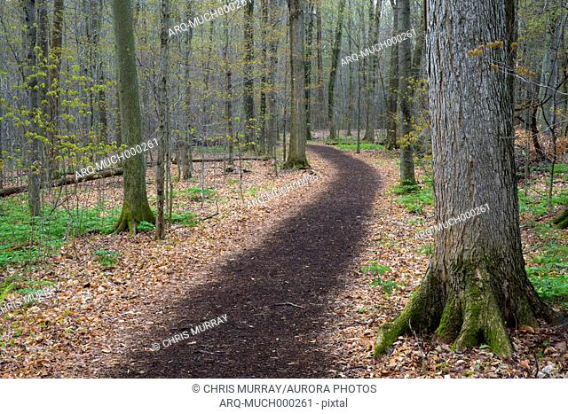 Footpath through forest with trees on sides, Beaver Lake Nature Center, Onondaga County, New York State, USA