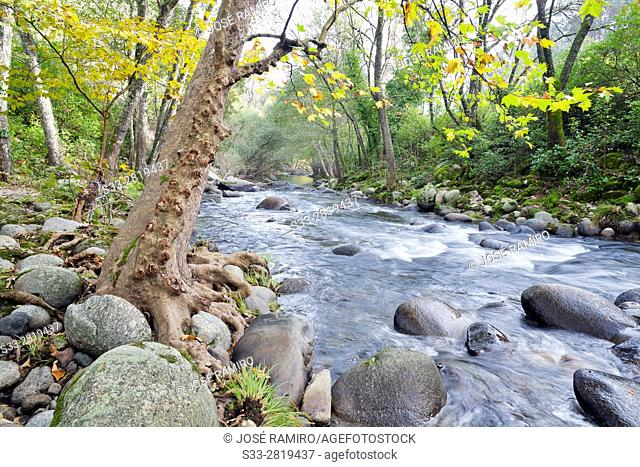 Arenal river in the Sierra de Gredos. Arenas de San Pedro. Avila. Castilla Leon. Spain. Europe