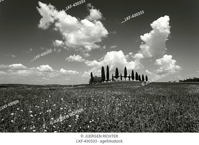 Tuscan country house wit cypresses, andpoppies, Val dOrcia, Orcia valley, UNESCO World Heritage Site, near Pienza, province of Siena, Tuscany, Italy, Europe