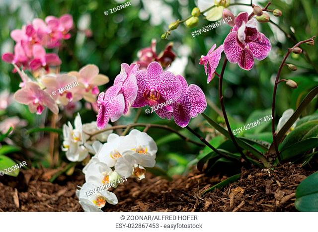 brightly colored orchids