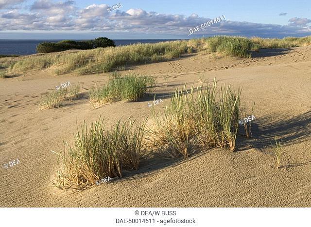 Lithuania - Klaipéda County - Curonian Spit (UNESCO World Heritage List, 2000). The sand dunes