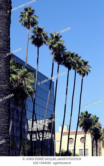 Palm Trees Reflected on Building, Hollywood, Los Angeles, California, USA
