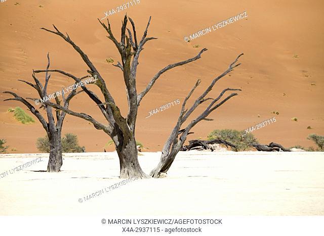 Dead trees in the salt pan of Namib desert near Soussuvlei, Namib-Naukluft National Park, Namibia