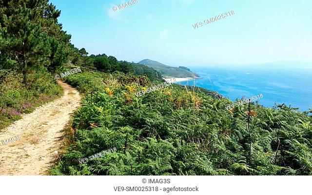 Trail to Melide beach, Ons island, Islas Atlánticas National Park, Pontevedra province, Galicia, Spain