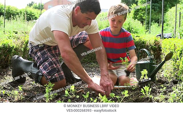 Father and son plants seedlings and then waters them. Shot on Sony FS700 in PAL format at a frame rate of 25fps
