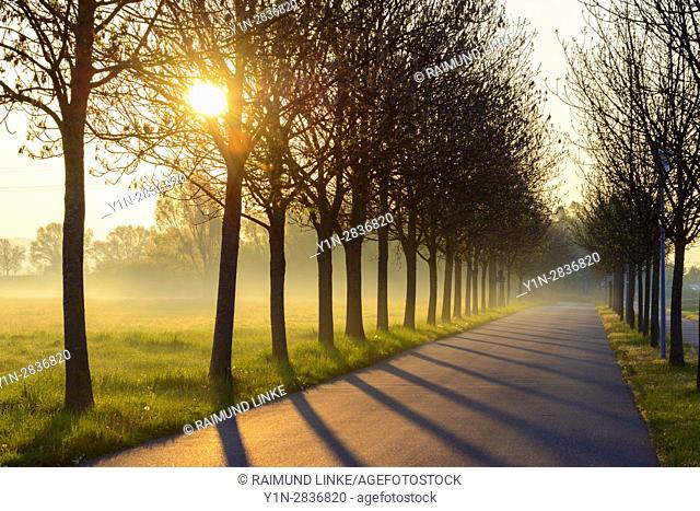 Tree lined road at sunrise, Lake Altmuhlsee, Gunzenhausen, Weissenburg-Gunzenhausen, Bavaria, Germany