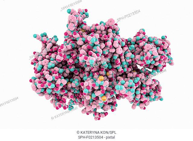 Coagulation factor VIII molecule, illustration