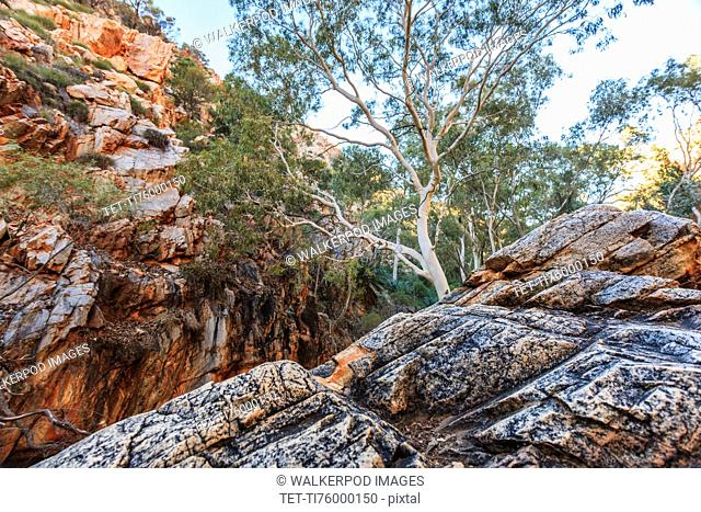 Australia, Outback, Northern Territory, Red Centre, West Macdonnel Ranges, Standley Chasm, trees in rocky mountains