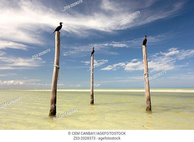 Three birds standing on three poles at the beach, Isla Holbox, Quintana Roo, Yucatan Peninsula, Mexico