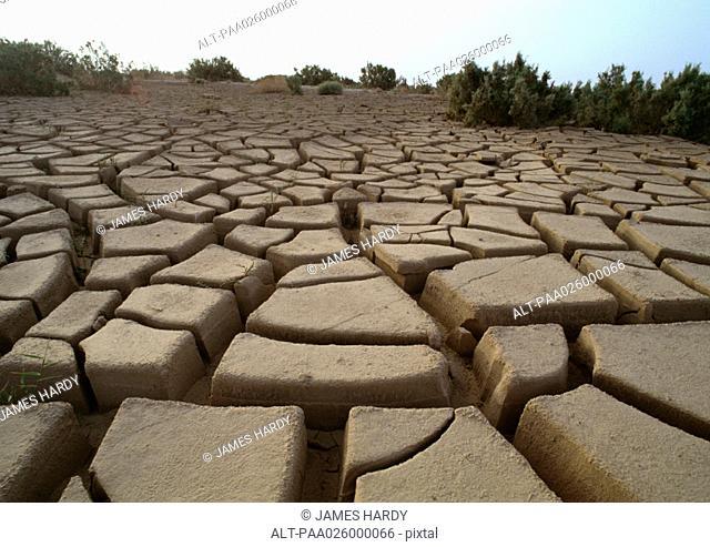 Tunisia, Sahara Desert, cracked mud, close-up