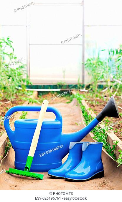The blue plastic watering can, rubber boots and rake on the background of a greenhouse with tomatoes. Bright equipment for garden care