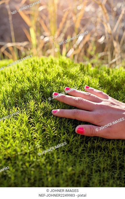 Female hand touching green moss