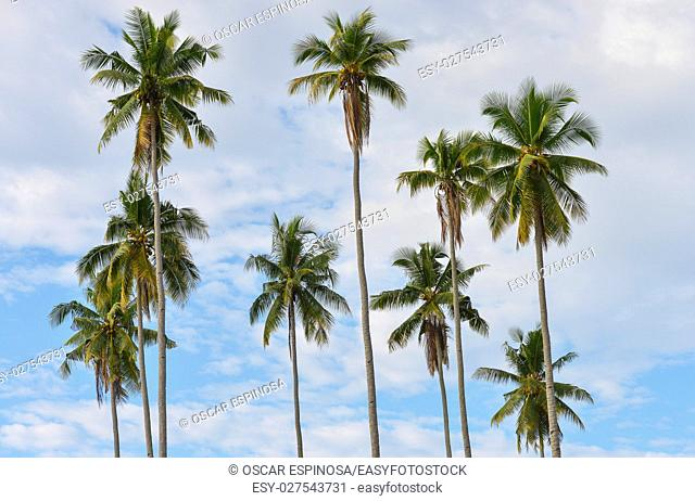 Background of palm trees in Bali, Indonesia