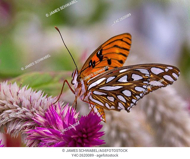 Close-up of Butterfly on flower in Butterfly Estates in Fort Myers Florida