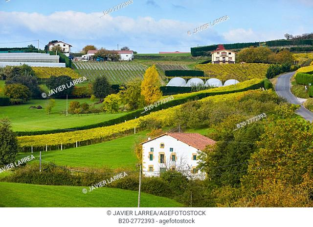Agriculture and vineyards of Txakoli, Autumn, Askizu Auzoa, Getaria, Gipuzkoa, Basque Country, Spain, Europe