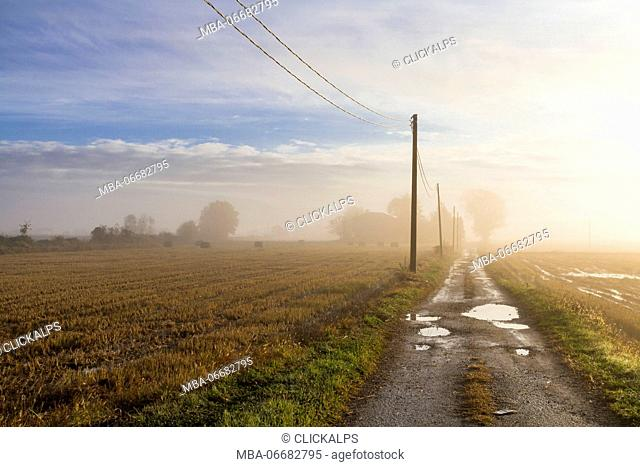 Foggy sunrise between the paddies of Vercelli (Buronzo, Vercelli province, Piedmont, Italy, Europe)