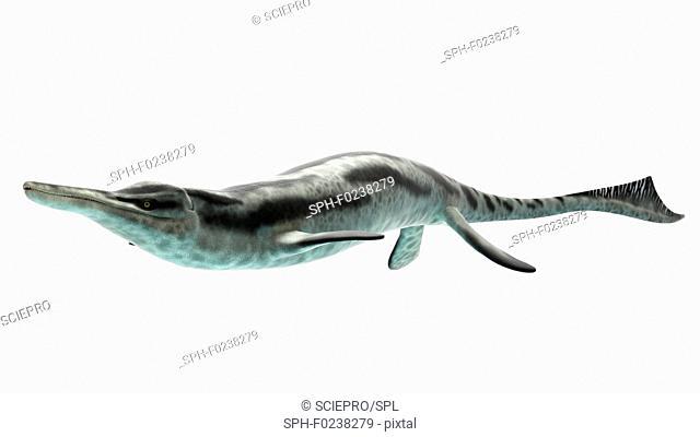 Illustration of a cymbosponlylus