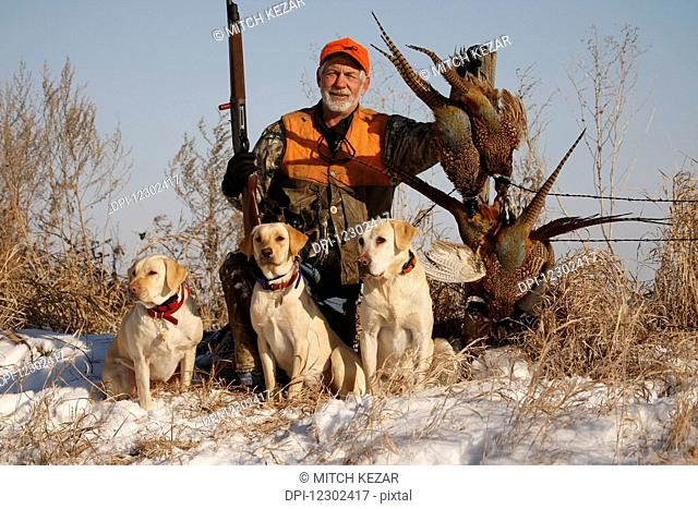 Pheasant Hunter In Field With Three Yellow Labs