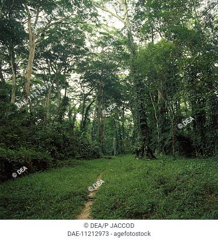 Venezuela, Aragua, Henri Pittier National Park, rainforest