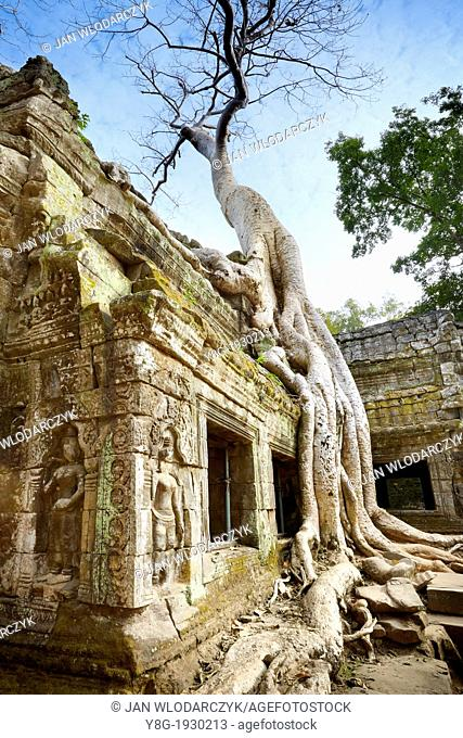 Angkor Temples Complex - Roots of a giant tree overgrowing ruins of the Temple Ta Prohm, Angkor, Cambodia, Asia, UNESCO