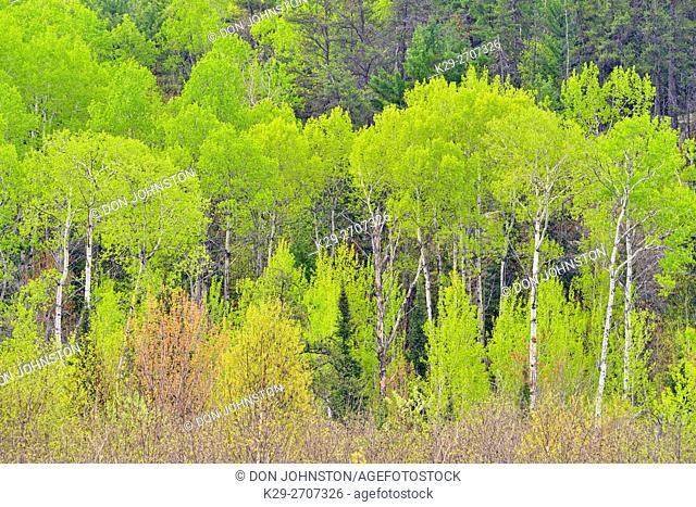 Spring foliage on a hillside, Espanola, Ontario, Canada