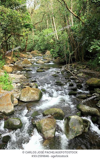 Cerro de la Muerte, San Gerardo de Dota, Costa Rica
