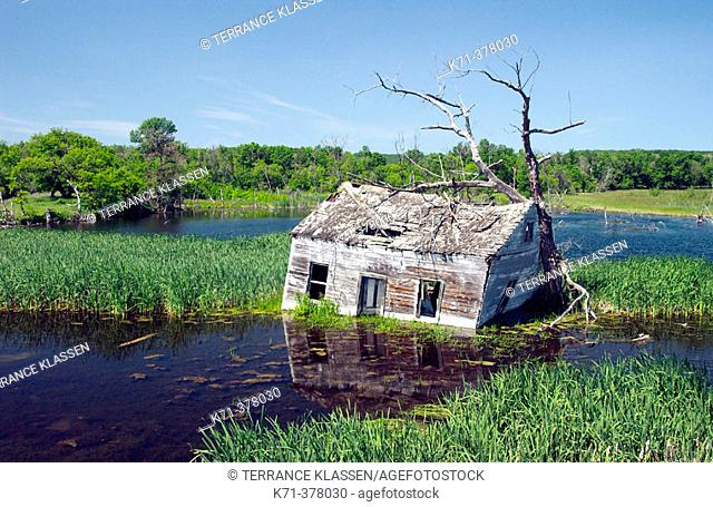 An abandoned flooded cottage near Kelwood, Manitoba. Canada