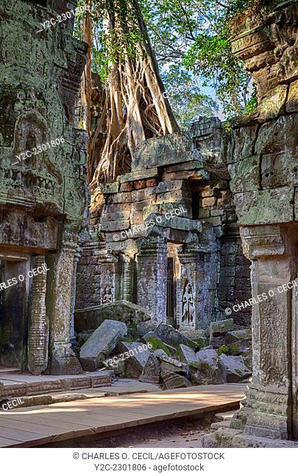 Cambodia. Ta Prohm Temple Ruins, 12th-13th. Century. Tree Growing atop the Ruins