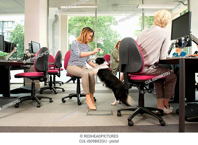 Women with pet dog in office