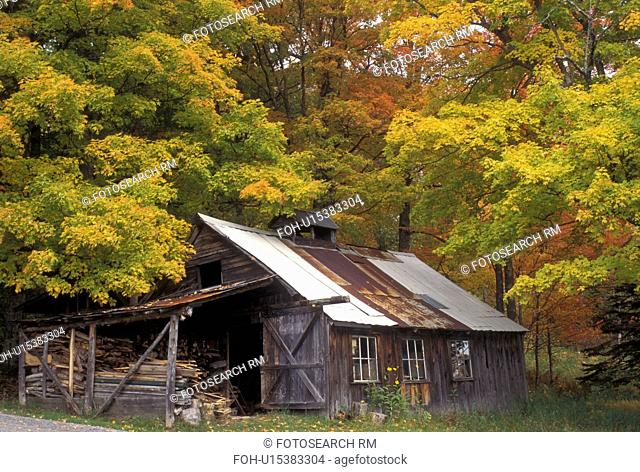 fall, sugar shack, Burke, VT, Vermont, Sugarhouse surrounded by maple trees in the autumn