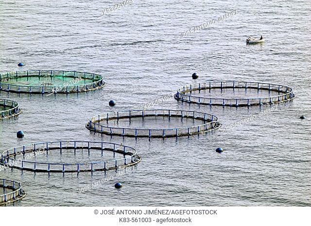 Sea bream hatcheries. Granada province,  Andalusia, Spain