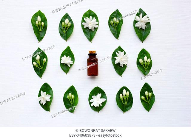 Bottle of essential oil with jasmine flower and leaves on white background