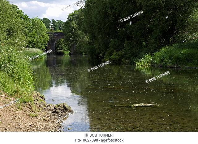River Mole Leatherhead Surrey England