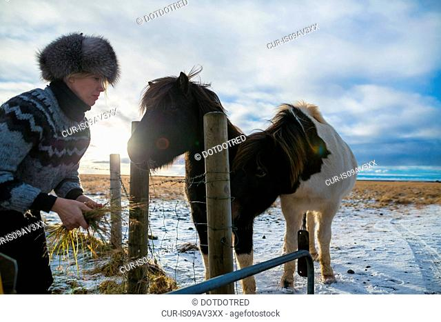 Mature woman feeding pony on snow-covered field, Iceland