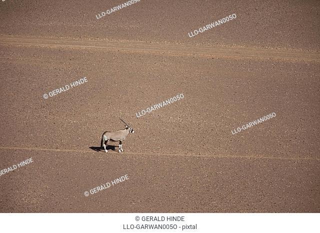 Aerial view of Gemsbok Oryx gazella standing in desert, Namibia
