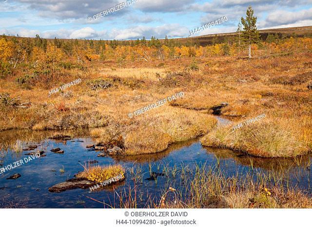 Bach, Europe, Finland, autumn, autumn colors, Kiilopää, scenery, landscape, Lapland, moor, Scandinavia, marsh, Urho Kekkonen, national park, water