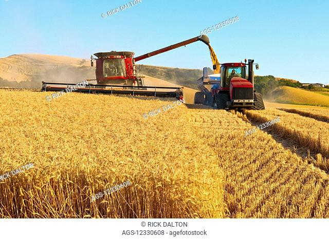 A Combine Offloads Grain To Grain Cart While Harvesting Grain In The Palouse Region Of Eastern Washington; Washington, United States Of America