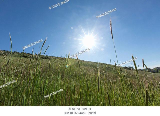 Tall grass on hill
