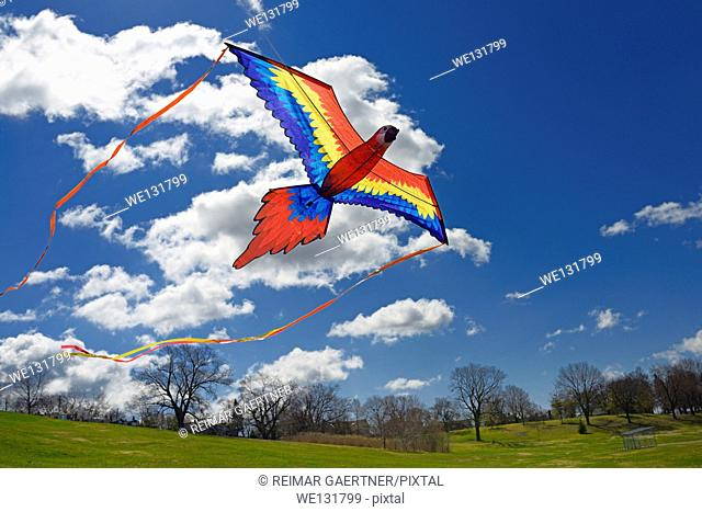 Macaw Parrot Kite flying against a blue sky in spring at Riverdale Park Toronto