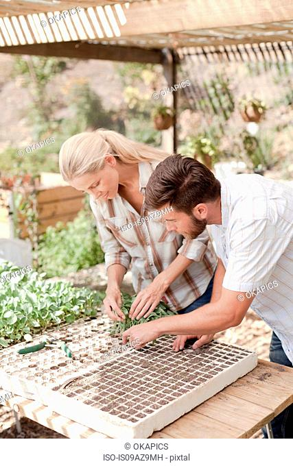 Mature couple planting seedlings in tray