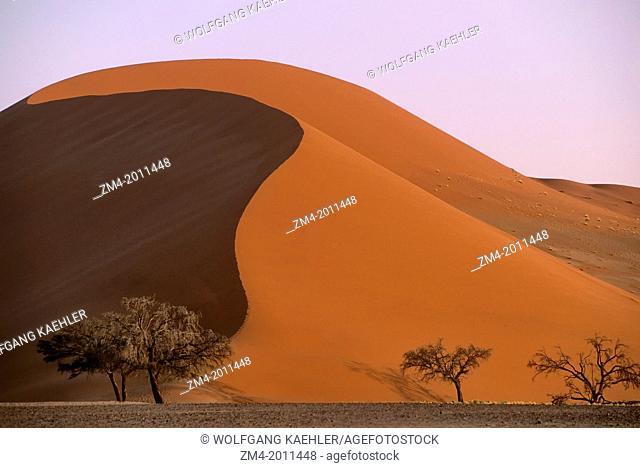 NAMIBIA, NAMIB-NAUKLUFT PARK, SOSSUSVLEI, TREES IN FRONT OF SAND DUNE, EVENING