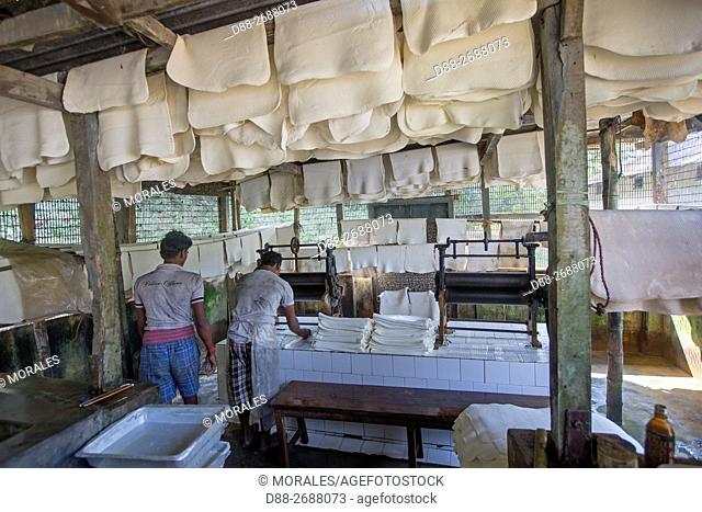 South east Asia, India,Tripura state,harvesting latex from rubber trees,manufacturing rubber sheets from the latex