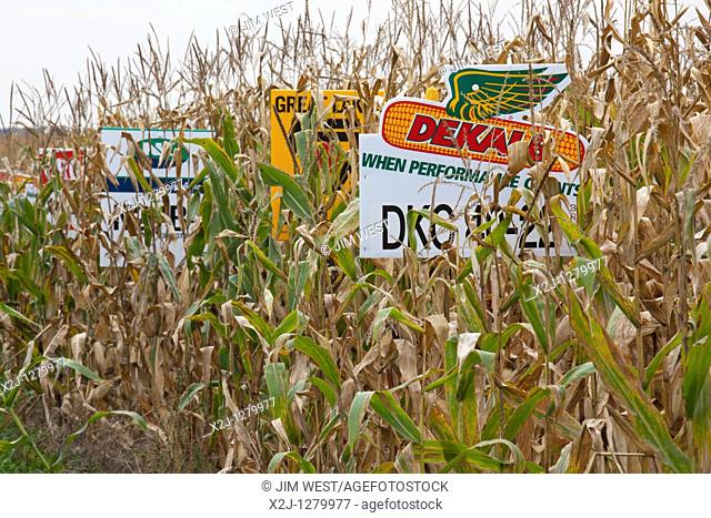 St  Nazianz, Wisconsin - Signs mark different crop varieties in a corn field