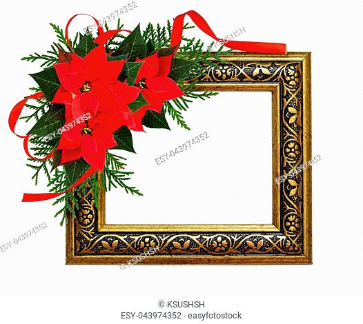 Christmas red poinsettia flowers corner arrangement with ribbon bow and decorative frame isolated on white background