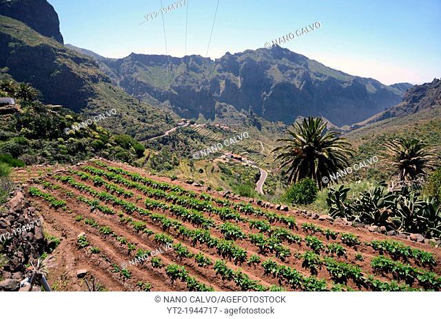 Masca Valley (Valle de Masca), Tenerife, Canary Islands